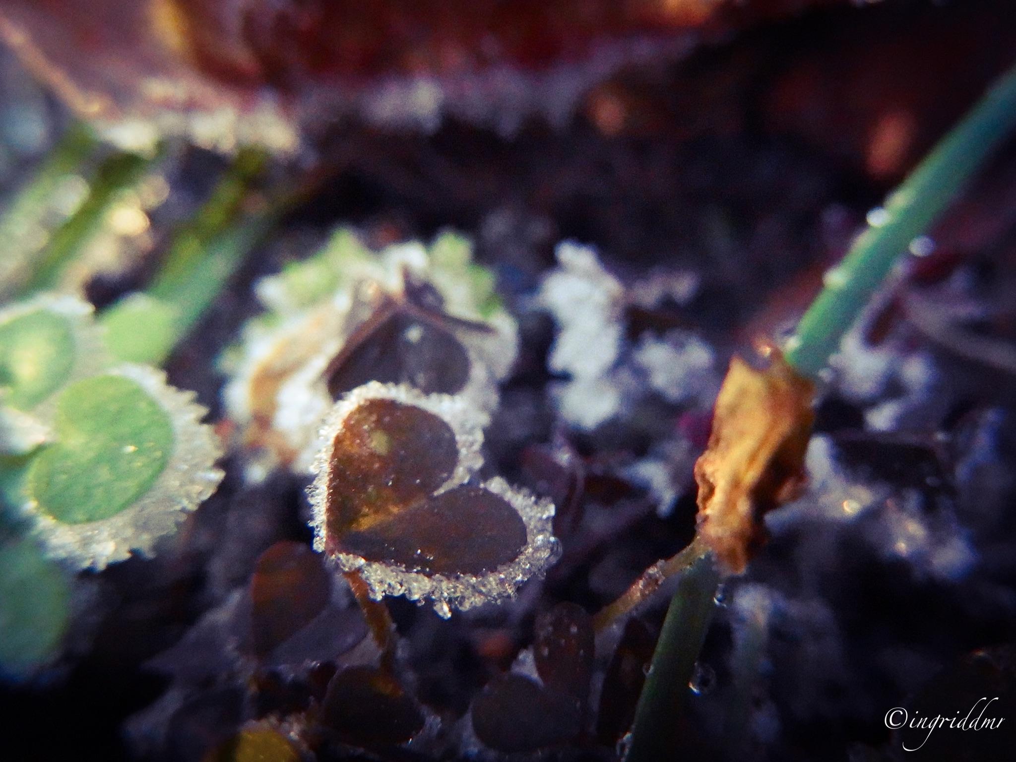#garden #frost