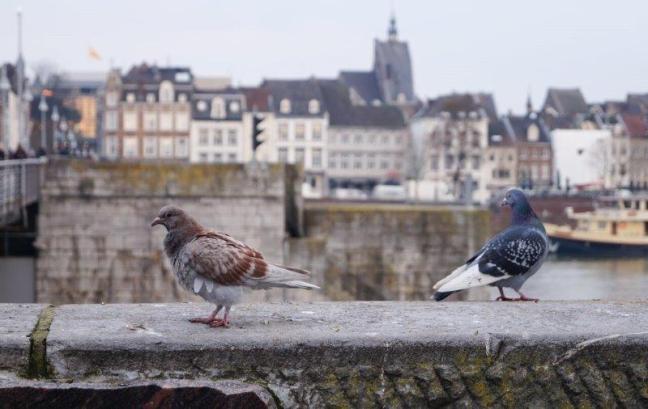 Maastricht 2018