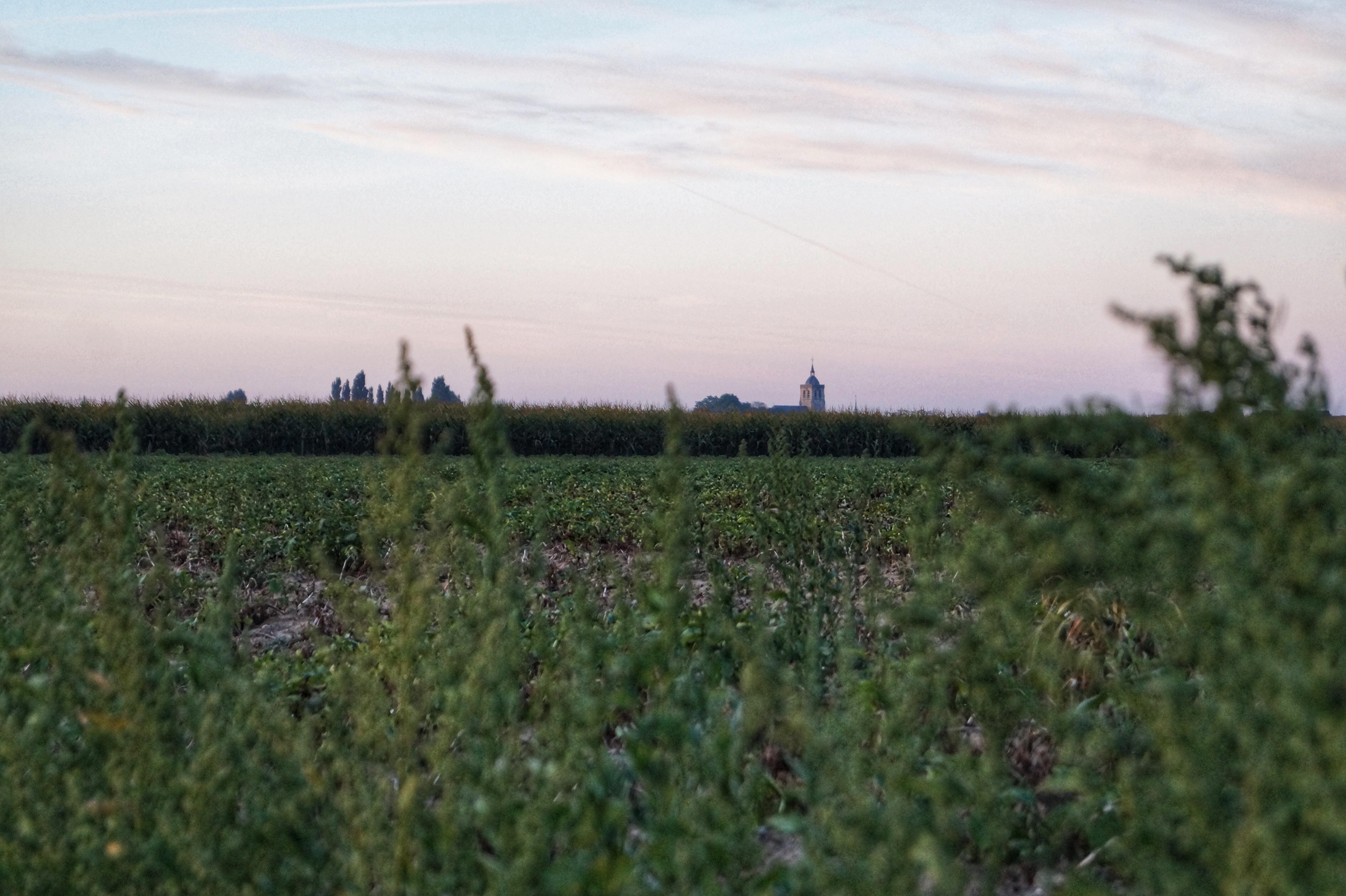 Flanders fields Poperinge