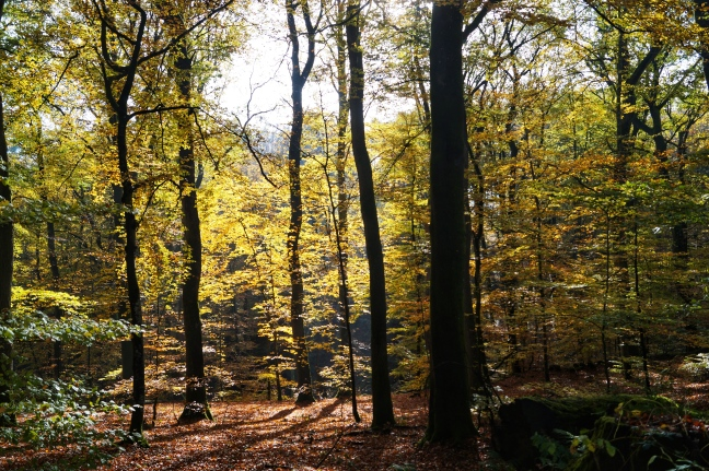a game of tones Fall at Mullerthal trail Luxemburg