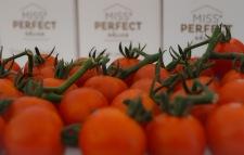 Hoogstraten Belgian tomatoes