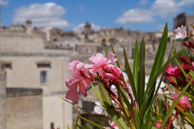 flowers Matera Basilicata Italy sassi