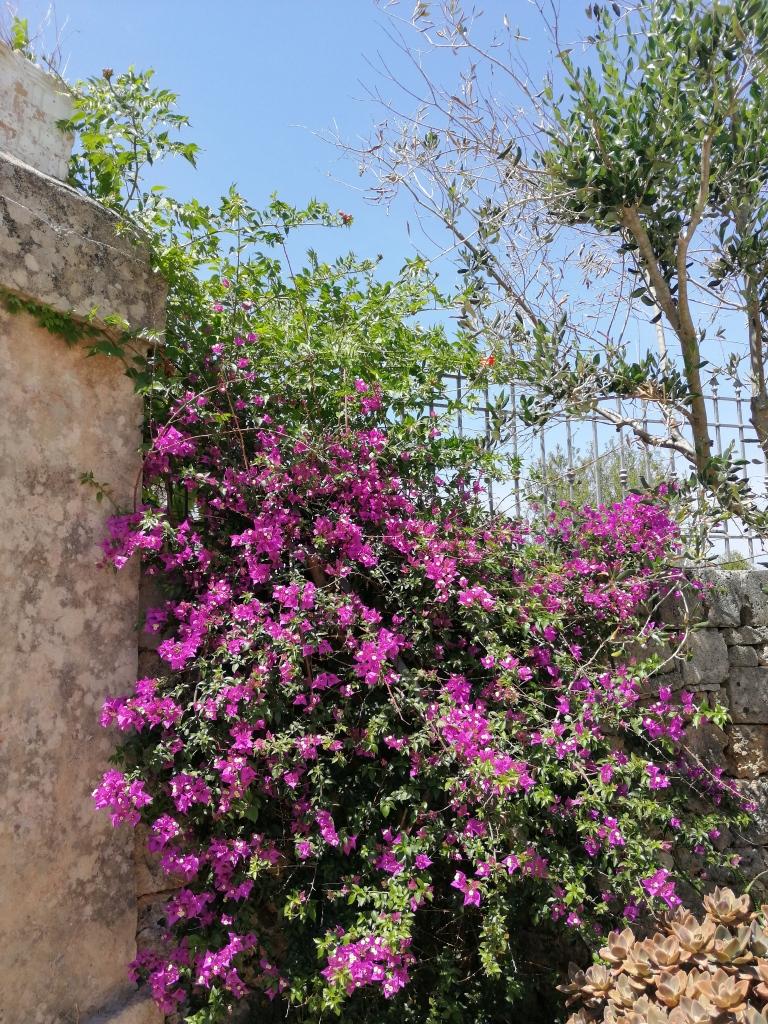 Li Calizzi Novoli Puglia